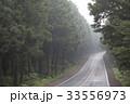 木道 並木道 杉 33556973