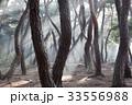 慶北 松 風景 33556988