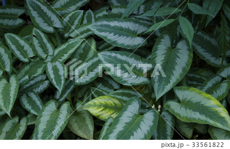 Creative layout made of green leaves 33561822