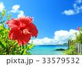 沖縄 海 ハイビスカスの写真 33579532