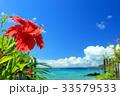 沖縄 海 ハイビスカスの写真 33579533