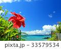 沖縄 海 ハイビスカスの写真 33579534