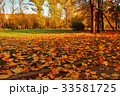 Road covered with fallen leaves in city park 33581725