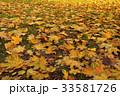 Fallen leaves of maple. Golden autumn 33581726