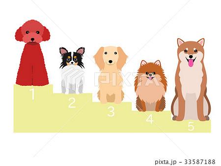 日本の人気犬 33587188