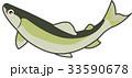 鮎 イラスト 33590678