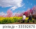 山梨県 桃源郷 桃畑と菜の花の咲く風景 33592670
