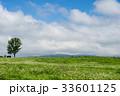 北海道 夏 草原の写真 33601125