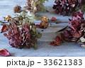 紫陽花のドライフラワー 33621383