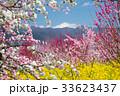 花桃の咲く風景 33623437