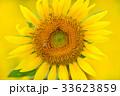 満開のヒマワリと蜜蜂(N) 33623859