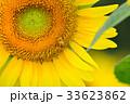満開のヒマワリと蜜蜂(N) 33623862