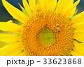 満開のヒマワリと蜜蜂(N) 33623868