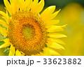 満開のヒマワリと蜜蜂(N) 33623882