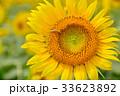 満開のヒマワリと蜜蜂(N) 33623892