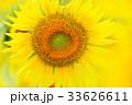 満開のヒマワリ(N) 33626611