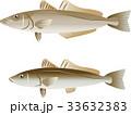 キス 鱚 鼠頭魚のイラスト 33632383