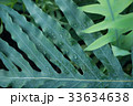 tropical plant green foliage background 33634638