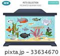 サカナ 魚 魚類のイラスト 33634670