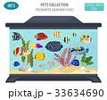 サカナ 魚 魚類のイラスト 33634690