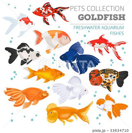 Freshwater aquarium gold fish icon set  33634710
