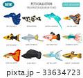 サカナ 魚 魚類のイラスト 33634723