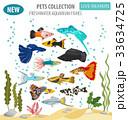 サカナ 魚 魚類のイラスト 33634725