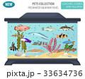 サカナ 魚 魚類のイラスト 33634736