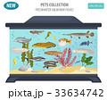 サカナ 魚 魚類のイラスト 33634742