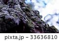 樹木 33636810