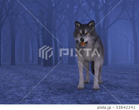 オオカミ 33642241