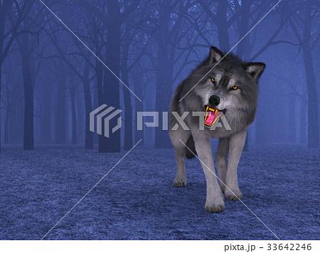 オオカミ 33642246