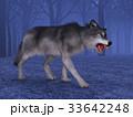 狼 イヌ科 動物のイラスト 33642248