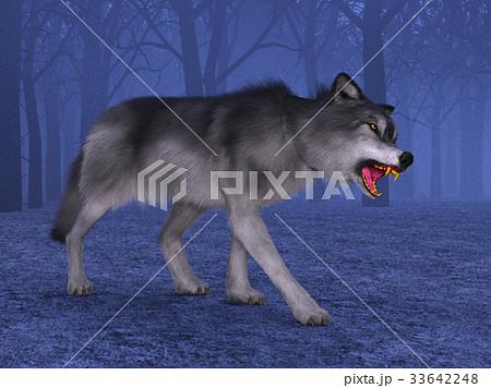 オオカミ 33642248