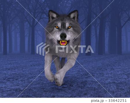 オオカミ 33642251