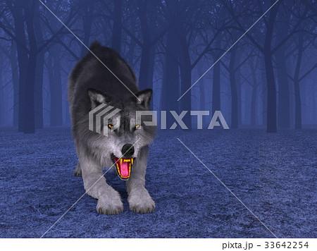 オオカミ 33642254