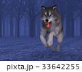 狼 イヌ科 動物のイラスト 33642255
