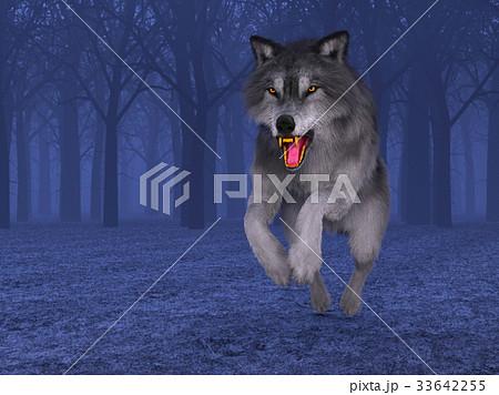 オオカミ 33642255