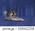 狼 イヌ科 動物のイラスト 33642258