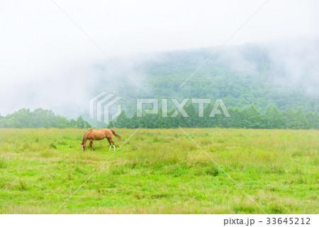 朝靄の放牧場。長野県の高原。立科町。 33645212