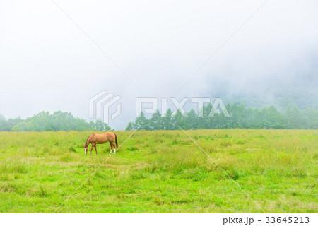 朝靄の放牧場。長野県の高原。立科町。 33645213