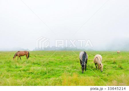 朝靄の放牧場。長野県の高原。立科町。 33645214