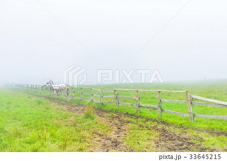 朝靄の放牧場。長野県の高原。立科町。 33645215