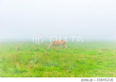 朝靄の放牧場。長野県の高原。立科町。 33645216