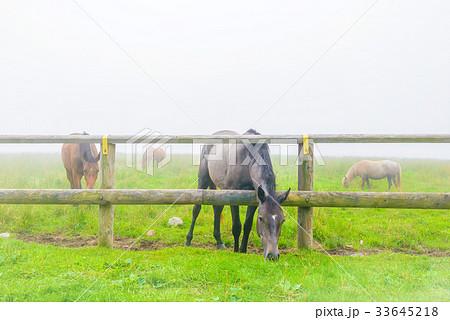 朝靄の放牧場。長野県の高原。立科町。 33645218