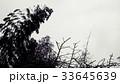 冬の木々 33645639
