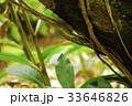 沖縄 33646826