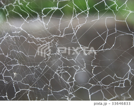 蜘蛛の巣 33646833