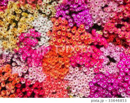 お花畑 33646853