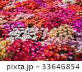 お花畑 33646854